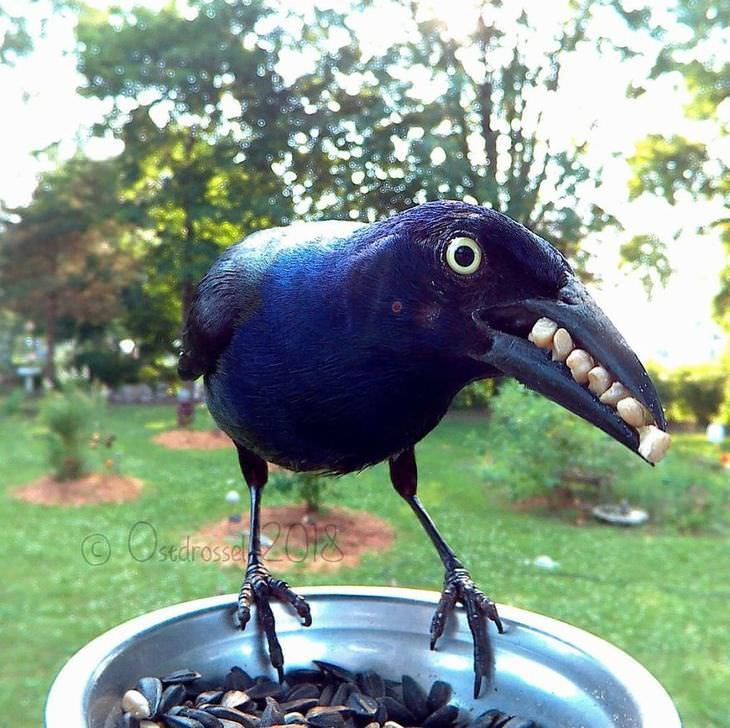 Fotos Espectaculares De Aves Capturadas En Fotomatón