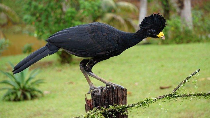 Las Aves Más Hermosas Del Mundo Están En Costa Rica