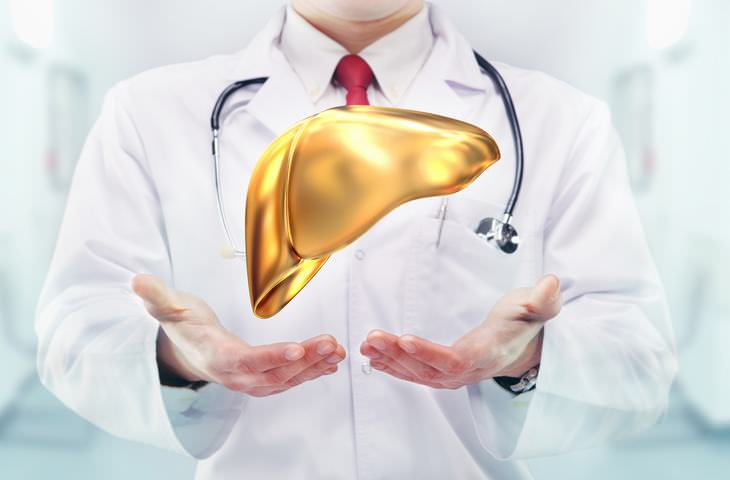 ¿Qué es el hígado y cuál es su función?