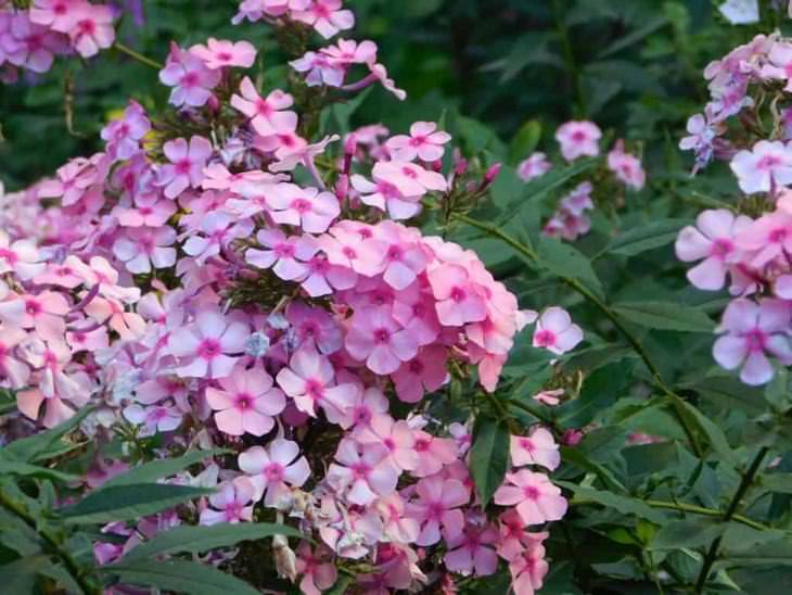 Bonitos Árboles De Hoja Perenne Flores