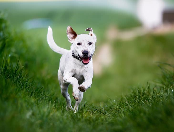 señales cola de un perro
