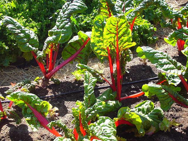 prepara tu propio jardín