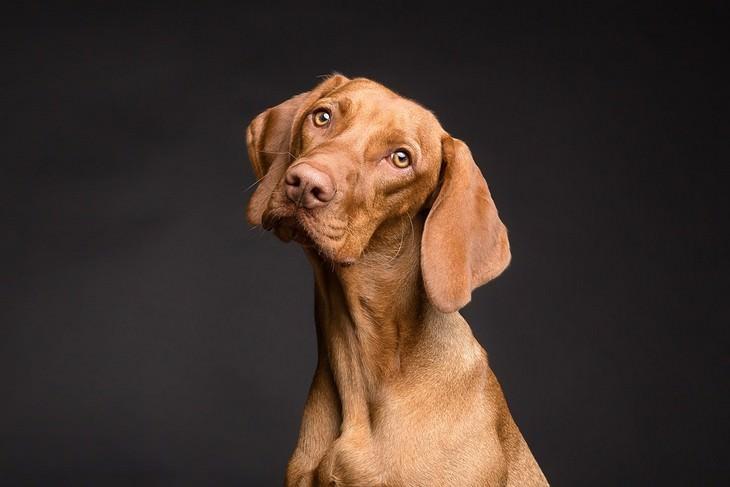 Señales De Que Tu Perro Es Muy Inteligente