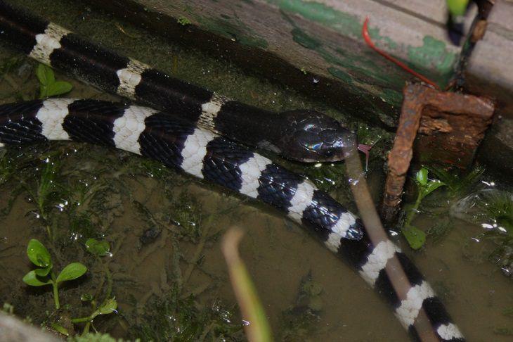 20 serpientes letales