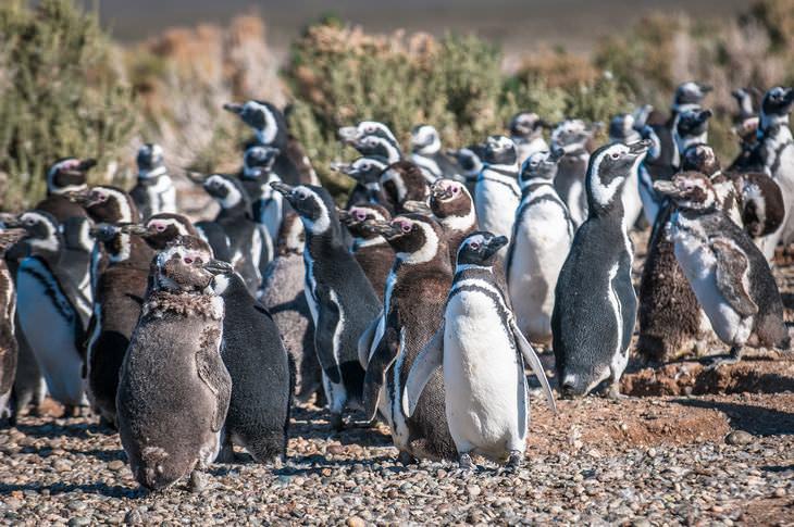Chiste Pingüinos Van Al Zoo