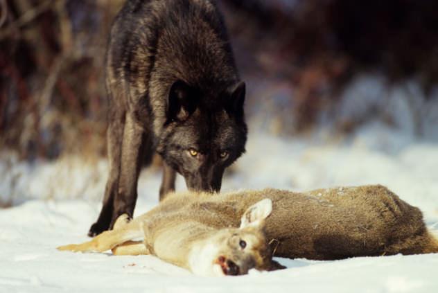 Cooperación Animal