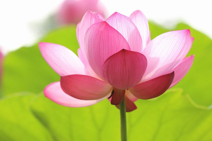 Flores Acuáticas