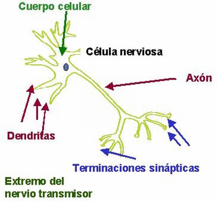 Siestas Síntomas De Alzheimer