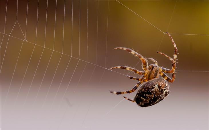No Matar Arañas