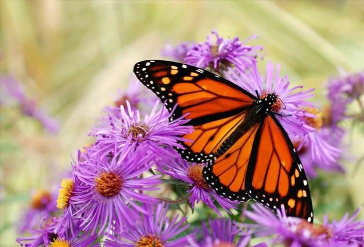 Cuento La Mariposa