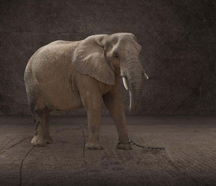 Cuento Elefante Encadenado
