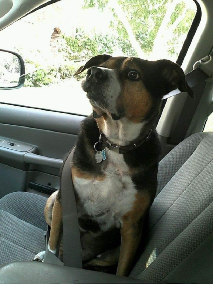 mascotas quieren escapar veterinario