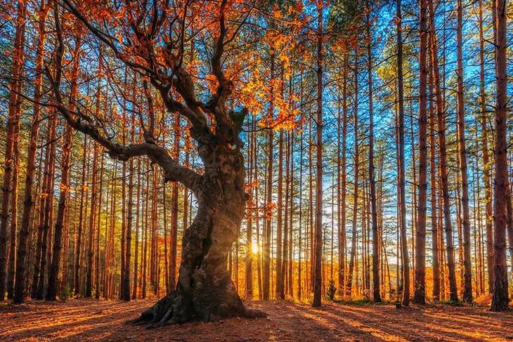 la belleza de Bulgaría