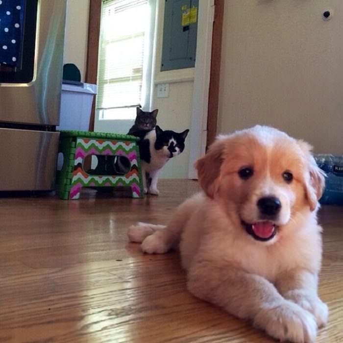 fotos lindas mascotas