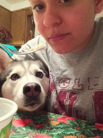 imágenes divertidas perro comida