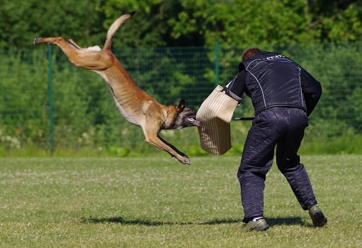 Consejos Efectivos Ante El Ataque De Un Perro