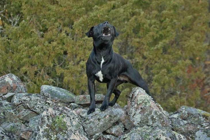 Qué Hacer cuando un perro actúa agresivamente