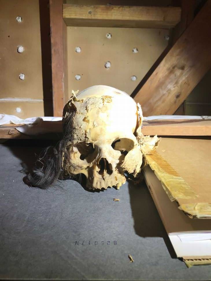 cráneo encontrado en casa