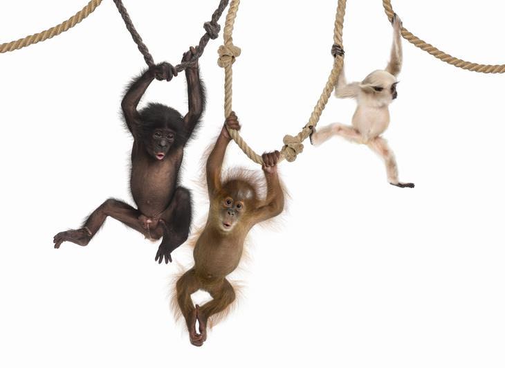 Chiste: Los 3 Monos Costosos