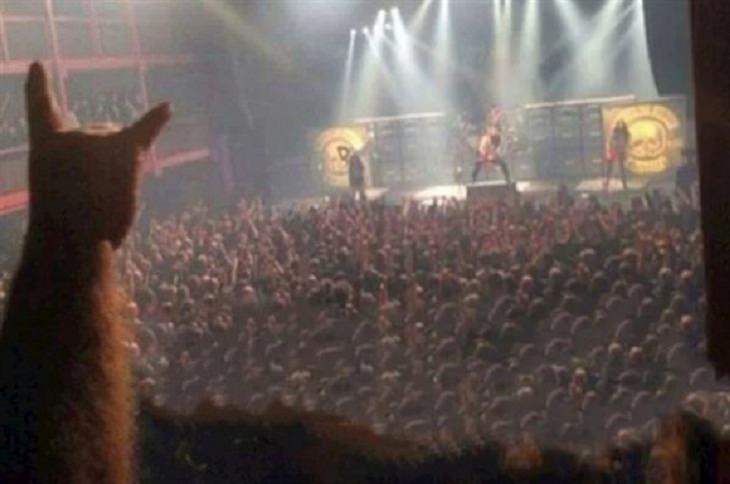 Imágenes Extras Gato en concierto de rock