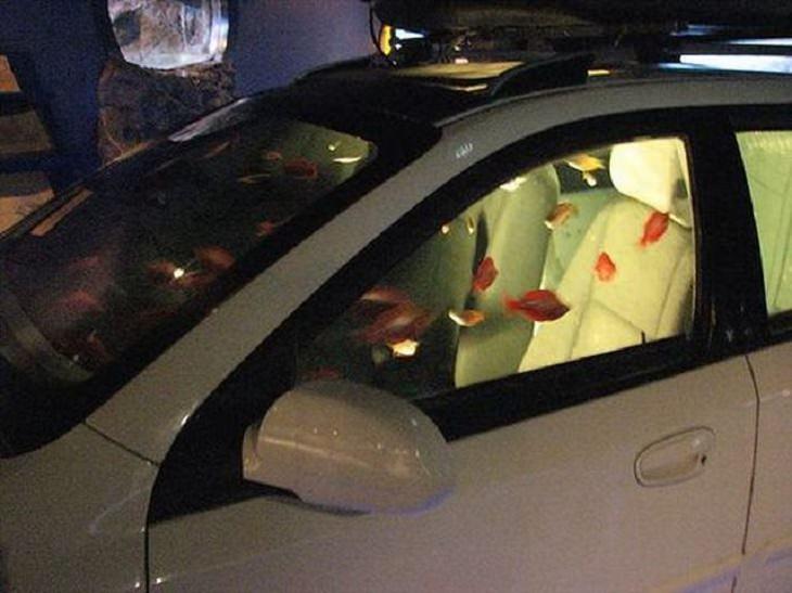 25 Increíbles Acuarios Que Te Sorprenderán 20. Un acuario integrado en un automóvil.
