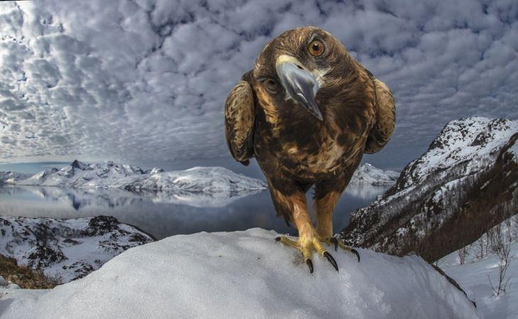Fotos De La Vida Silvestre águila real