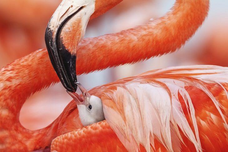 Fotos De La Vida Silvestre Flamingos Caribeños