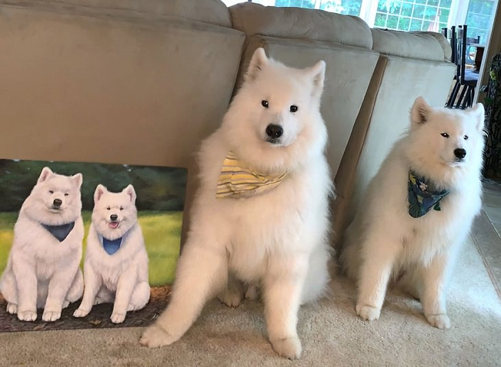 Retratos de animales Huskies
