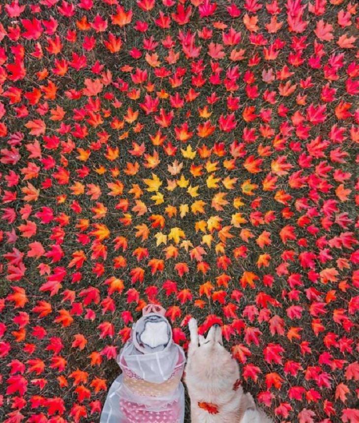 Celebra La Belleza Del Otoño Con 20 Fotografías De Todo El Mundo hojas de maple