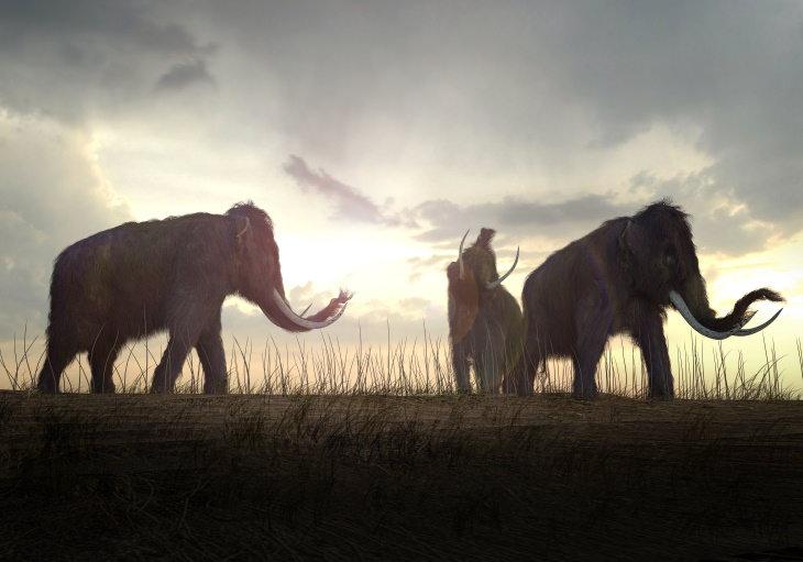 Alucinantes Datos Históricos Los mamuts lanudos aún estaban vivos cuando se construyeron las primeras pirámides
