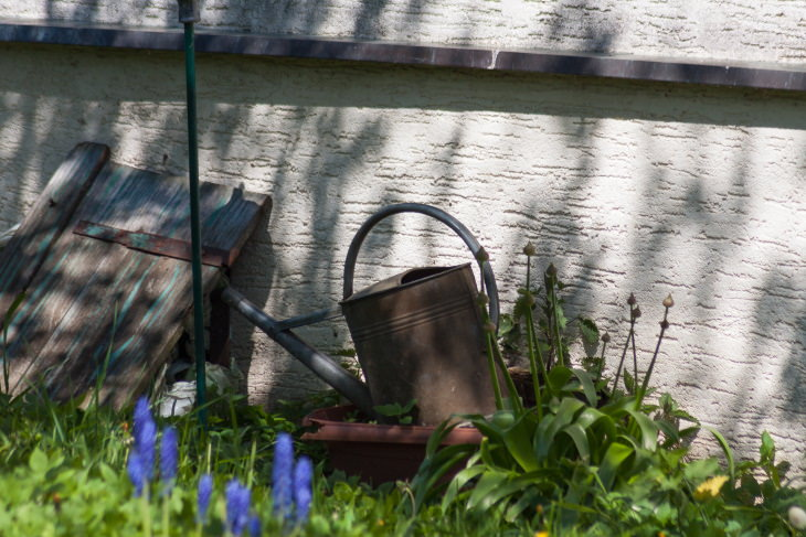 Hábitos Dañinos Pueden Atraer Roedores a Tu Hogar Las plantas crecen alrededor del perímetro de tu casa