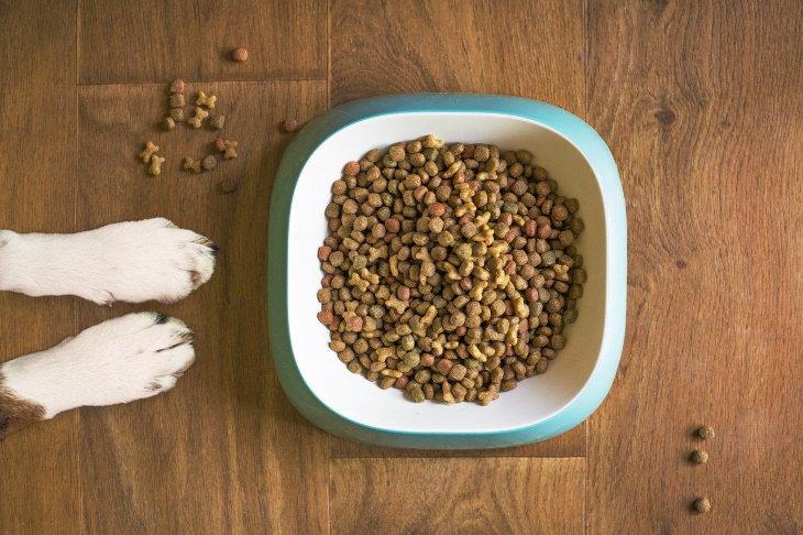 Hábitos Dañinos Pueden Atraer Roedores a Tu Hogar  Alimentas libremente a tus mascotas