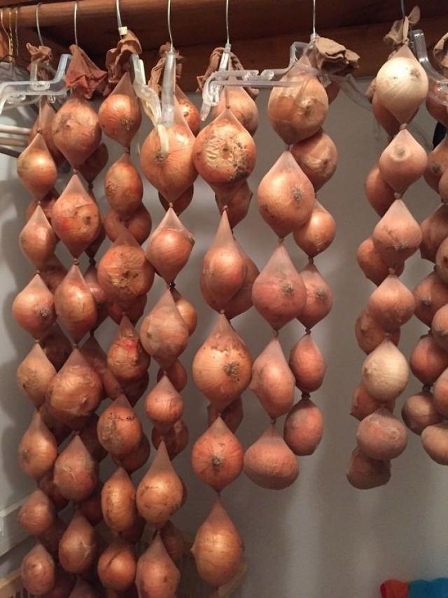 2. Almacenar cebollas en pantimedias puede ayudarlas a mantenerse frescas hasta 8 meses
