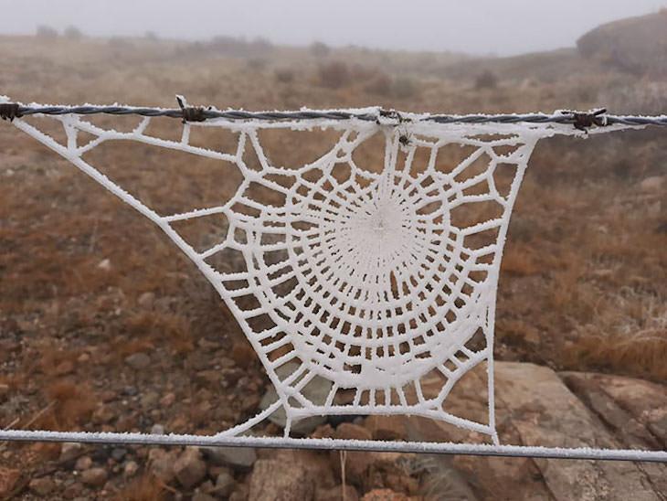 Ilusiones ópticas accidentales Una telaraña congelada que parece tejer