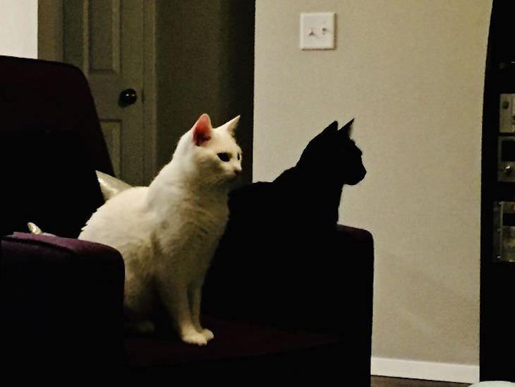 Ilusiones ópticas accidentales  El gato negro se parece a la sombra del gato blanco