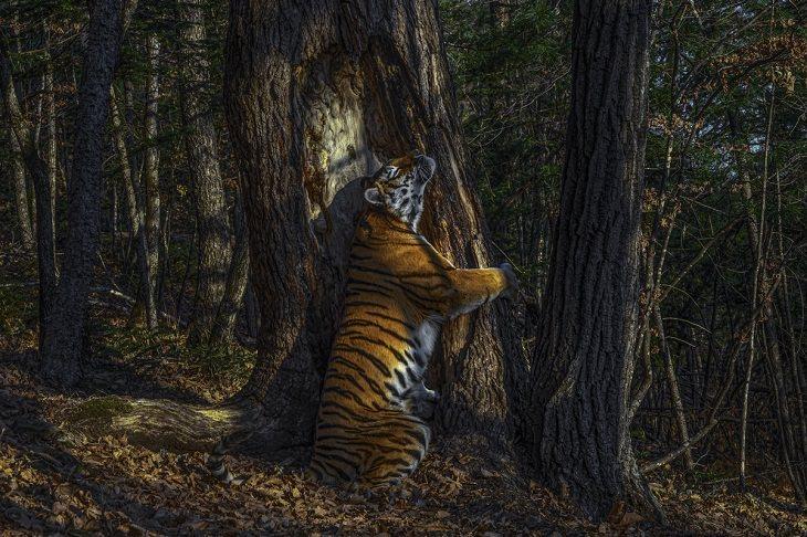 Ganadores Fotógrafo De La Vida Salvaje 2020 El abrazo de Sergey Gorshkov (Rusia). Ganador, Fotógrafo de vida silvestre del año y Ganador, Animales en su entorno.