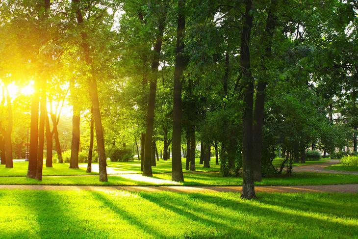 Trastorno Afectivo Estacional Exponerse a tanta luz solar como sea posible.