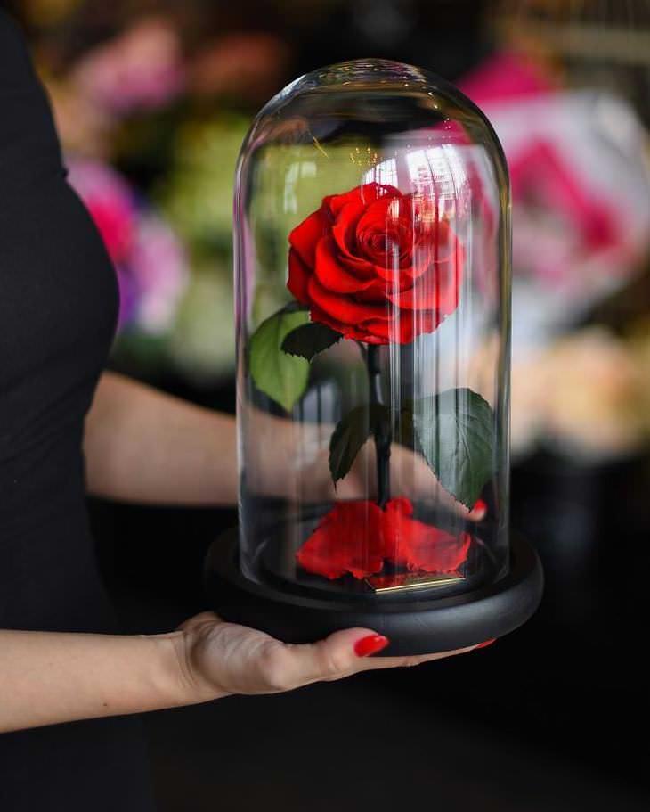 Cada rosa está contenida en una cúpula de vidrio única.