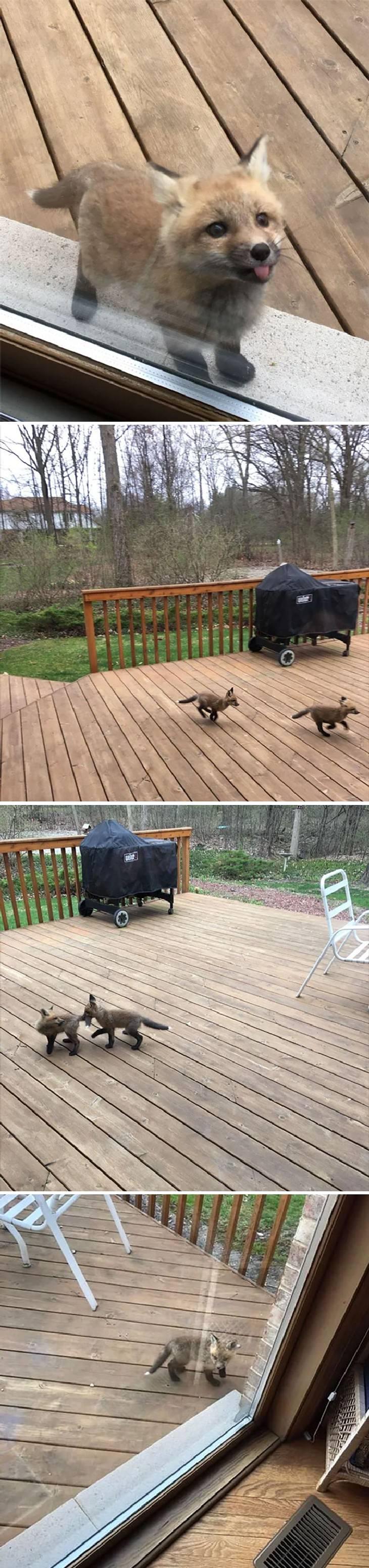 """2. """"Zorros bebés aparecieron para saludar en la casa de mi abuela"""""""