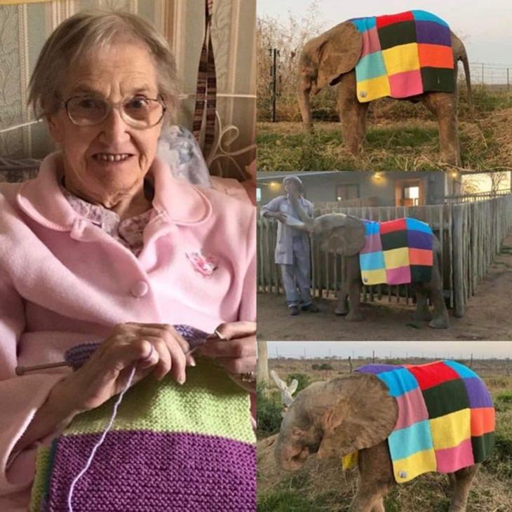 12 Hermosas Fotografías Cuentan Conmovedoras Historias mujer teje suéter a elefante