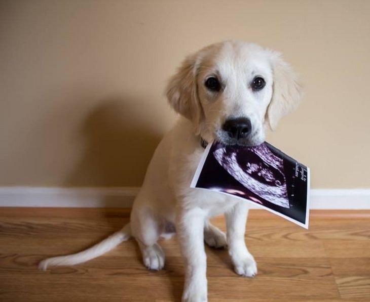 12 Hermosas Fotografías Cuentan Conmovedoras Historias cachorro con imagen de ecografía