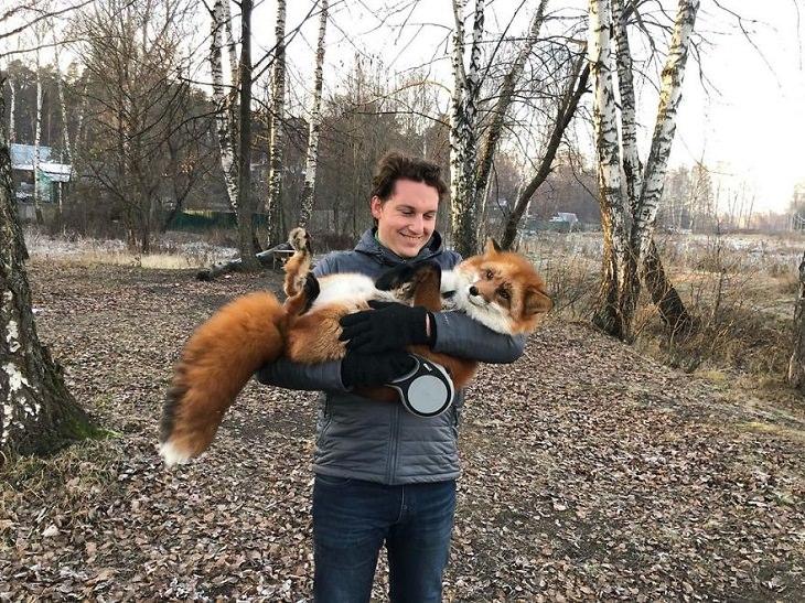 20 Fotografías Del Zorro Rescatado Más Lindo Del Mundo hombre cargando a un zorro