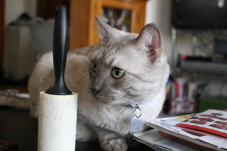 Trucos De Limpieza Para Dueños De Mascotas Utiliza un rodillo de pelusa para limpiar los muebles