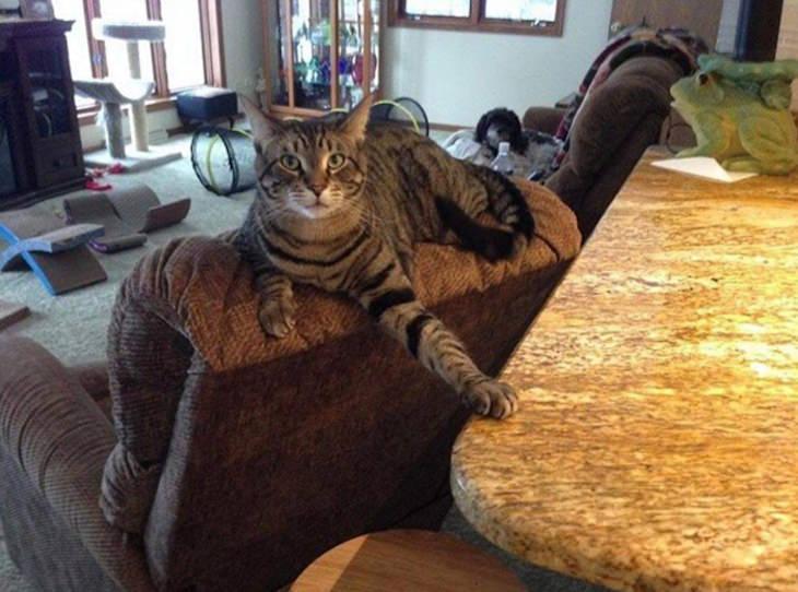 15 Imágenes Divertidas De Gatos Siendo Malvados gato en el mostrador