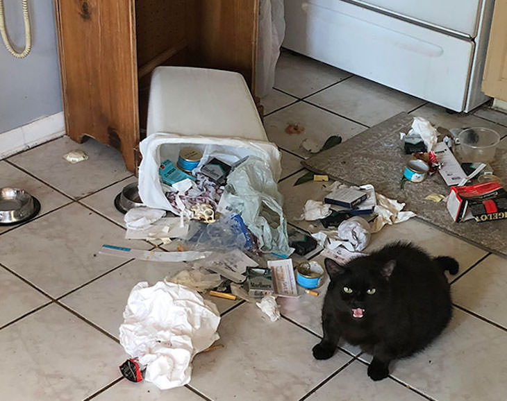 15 Imágenes Divertidas De Gatos Siendo Malvados gato tirando la basura
