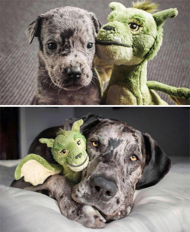 Fotos De Mascotas Con Sus Juguetes