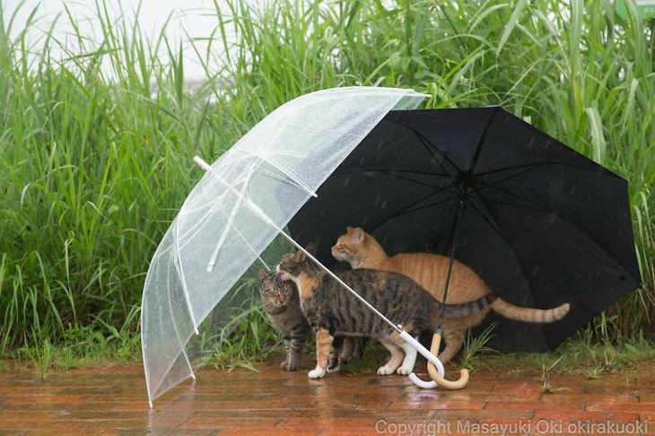 Fotógrafo Captura La Vida De Los Gatos Callejeros De Tokio Gatos bajo sombrillo