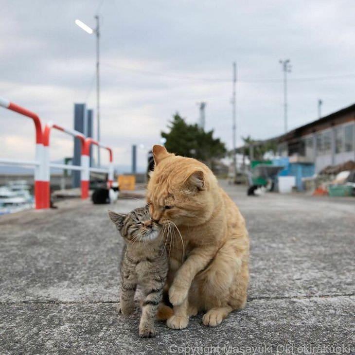 Fotógrafo Captura La Vida De Los Gatos Callejeros De Tokio Lindo momento familiar