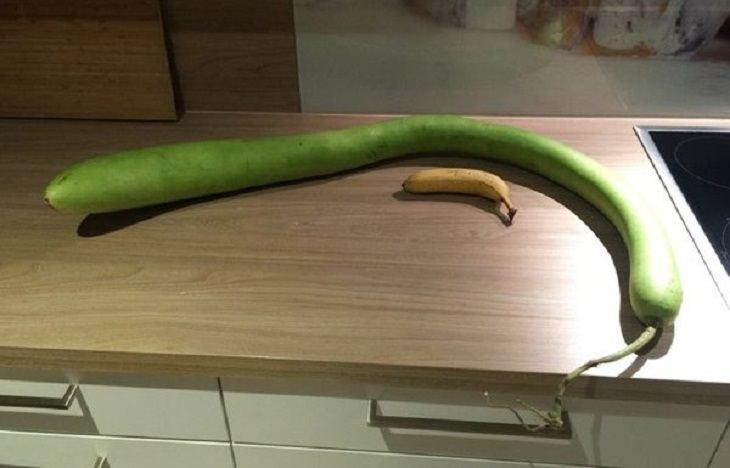 Frutas y Verduras De Formas Extrañas Que Se Ven Divertidas Calabaza enorme