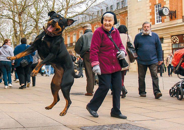 Fotos Travesuras De Perros En La Calle perro bailando